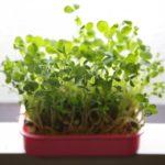 葉野菜が高い!豆苗ならコスパ最強で栄養もバッチリ。